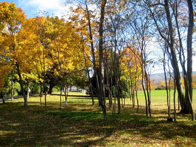 Bennington College campus. Photo courtesy of Zoe Rath.