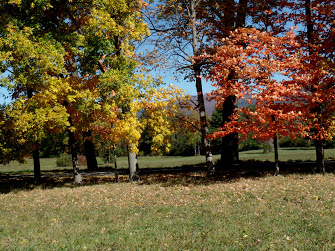 Beautiful foliage at Bennington College. Photo by Zoe Rath.